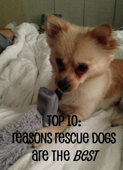 Top 10: Reasons Rescue Dogs are the Best